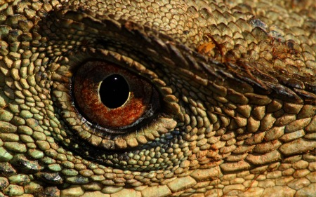 reptile-eye-desktop-background.jpg